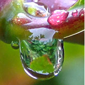Garden reflected in raindrop