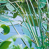 The pond in the garden, May 2003