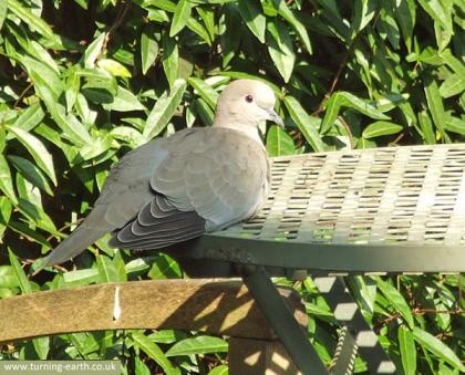 dove-010414.jpg
